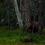 Plats 6. I storskogen - Mats Grimfoot