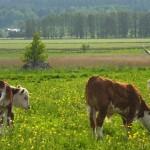 Foto: M&M Kälvemark