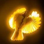 Plac 7. Guldfågeln-Henry Fredriksson. Vackert effektsökeri, som har lyckats fånga oss. Synd att ena vingspetsen skymmer ögat.