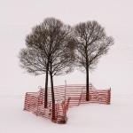 Plac 3. Trädinramning - Per Wallén. En skön grafisk bild. Träden och staketet framträder fint mot den ljusa bakgrunden. Bronsplats!