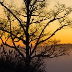 Plac 5. Kontraster - Ann Lundström. En bild med fina färger och kontraster. Bakgrunden ger ett lugnt intryck. Hade bilden förändrats för mycket om man tagit med hela trädet?