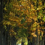 Plac 8. Skymningsträd - Margareta Kälvemark. Den här bilden har ett fint ljus, men skulle vinna på att beskäras i både högra och vänstra sidan.