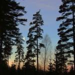 Plac 9. Skymningsträd - Anders Hjerling. Den här bilden har ett fint ljus, men skulle vinna på att beskäras i både högra och vänstra sidan.