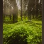 4. Skogsljuset-129  En härligt inbjudande   sagoskog med skir grönska.   Ljusstrålarna som ser ut att   komma upp från stenen (?)   vid trädets rot får min   fantasi att gå igång. Vad   finns där? Jag vill gå fram   och se. Upptäcka vad det är   som strålar så spännande.   Nu gissar jag att det är två   bilder som har lagts   samman till en. Roligt att få   se en lite annorlunda bild.   Bra!