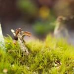 """2. Lars Thaning - """"Mot toppen"""" Här blir det lilla stort, gräset blir likt träd, svamparna som bergstoppar att bestiga. En mycket bra komponerad bild, färgerna fint tonade som hjälper till att lyfta fram myrans klättring mot toppen."""