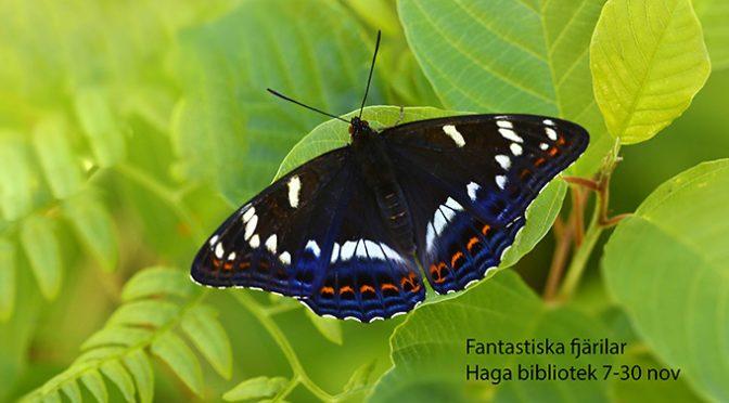Fjärilsbilder: Hagabiblioteket